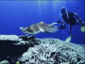 我首套海底环状生态监测观测网成功布放
