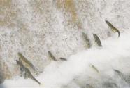 青海湖见证青海生态变迁