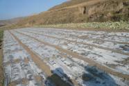 """真担心几年后地不能种了!治理农田白色污染呼唤""""再革命"""""""
