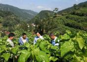 绿色产业融合发展托起沈坝镇百姓小康梦