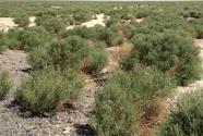 """为你钟情——新疆科学家的""""荒漠植物银行"""""""
