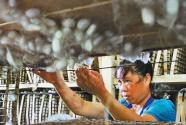 重慶市黔江區:夏繭豐收 農民增收