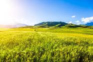 延长土地承包权有利于推动乡村振兴