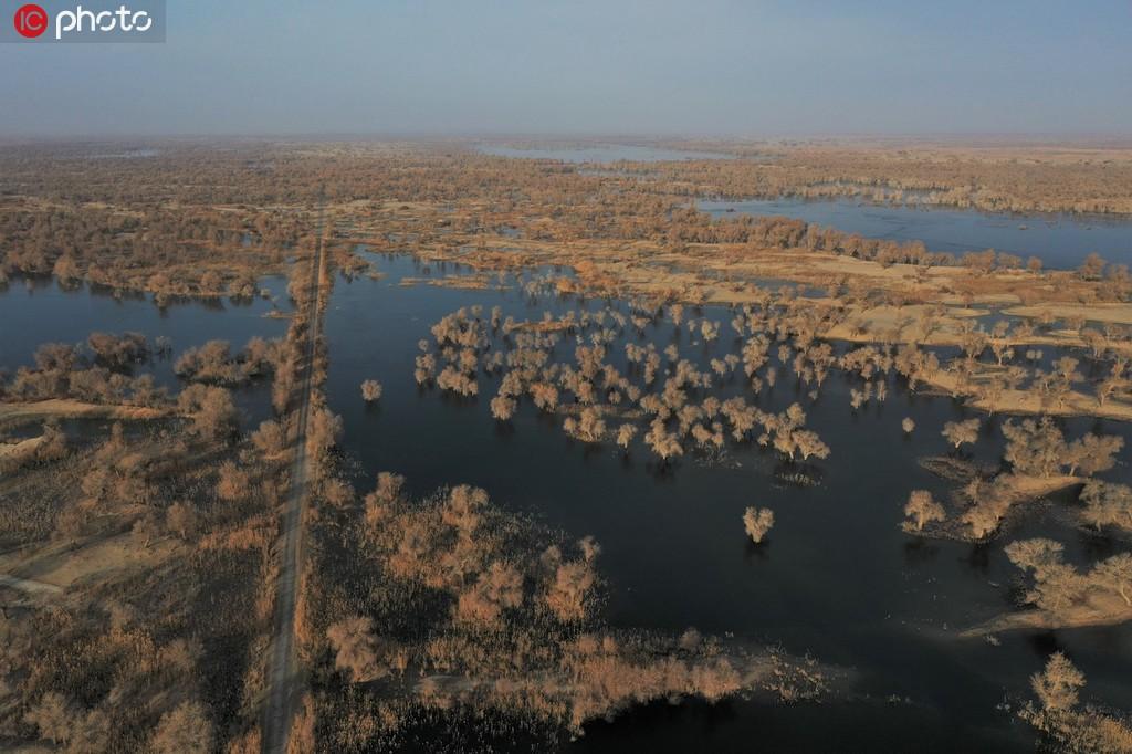 新疆尉犁罗布淖尔国家湿地公园色彩斑斓 景色迷人【8】