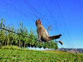 候鳥之殤:數千米鳥網驚現白洋淀 非法捕鳥緣何屢禁不止