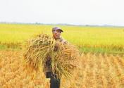 非洲粮食安全面临严峻挑战