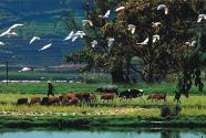 把人與自然和諧共生的生態文明觀落到實處