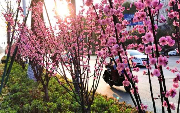 重庆永川:宅家观春色