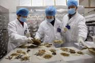 中医药防治新冠肺炎发挥了哪些作用?
