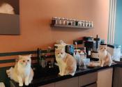 """""""网红""""宠物咖啡馆的安全隐患:猫咖逗猫被抓伤 责任怎么算?"""