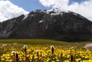 天山一号冰川保护区成为野生动物天堂