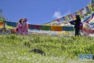 西藏林芝:避暑天堂惹人醉