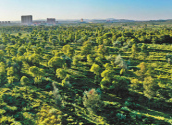 46年接力,几代人奋斗,如今,人进、沙退—— 榆林,绿色版图在延展