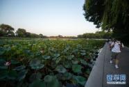 北京:老百姓家门口的绿地公园