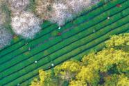 鄉村好風景 致富好資源