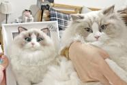 寵物紀念經濟的兩重天:定制紀念品網上迎風口 殯葬服務線下遇寒流
